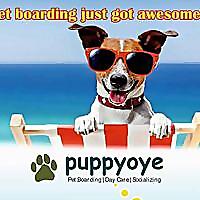 PuppyOye| Dog Boarding, Dog Daycare, Dog Training, Dog grooming