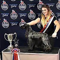 Vanity Furr Dog Grooming