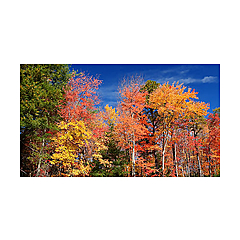 New England Forests