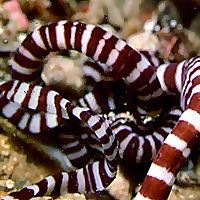No Bones | Department of Invertebrate Zoology News