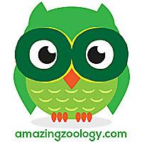 Amazing Zoology