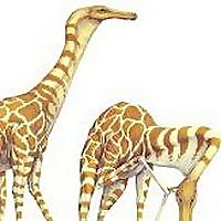 Speculative Evolution