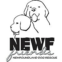 Newf Friends Newfoundland Dog Rescue
