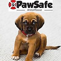 PawSafe Animal Rescue