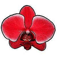 Maria's Orchids