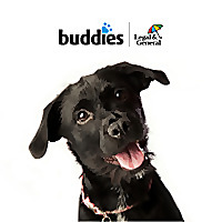Buddies | Pet Insurance Blog