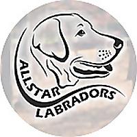 Allstar Labradors
