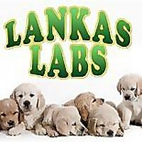 Lankas Labs | Blog