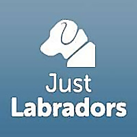 Just Labradors Forum