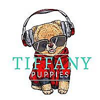 Tiffany chihuahuas and pomeranians - News