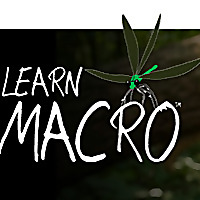 Learn Macro | Macro Photography Ramblings and Observations from Across the Pond by Paul Harcourt Dav