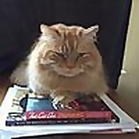 Three Irish Cats Adventures in cats and cat rescue | Rescue