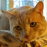 Furry Friends No-Kill Cat Rescue of Vancouver, Washington