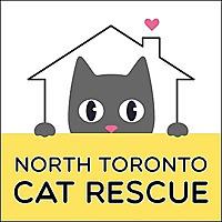 North Toronto Cat Rescue | Markham and GTA Cat Adoptions