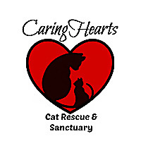 Caring Hearts Cat Rescue