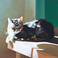 The Creative Cat | cat rescue