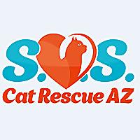 SOS Cat Rescue AZ Saving Orphan Kittens and Senior Cats in Arizona