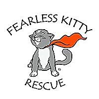 Fearless Kitty Rescue Fearlessly Saving Kitties in Need