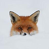 British Wildlife Centre ~ Keeper's Blog