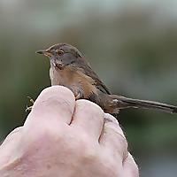 Lamsdell Bird Ringing and Wildlife Blog