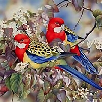 Heidi Willis Blog Botanical and Wildlife Artist