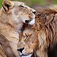International Wildlife Bond