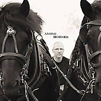 Amish Horses