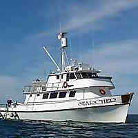 Searcher Natural History Tours - Baja Whales