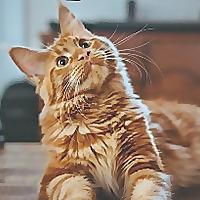 Upgrade Your Cat