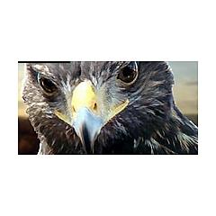 Nevada Falconry