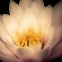 Yoga Yukta   Ayurveda