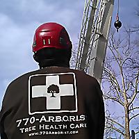770 Arborist | Atlanta Arborist Blog