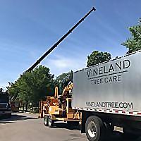 Vineland Tree | Arborist Blog