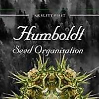 Humboldt Seeds UK   Blog on cannabis