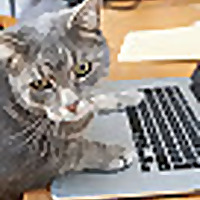 George Online Cat   AGONY AUNT ADVICE FOR CATS HAVING TROUBLE WITH THEIR HUMANS
