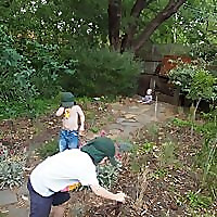 Slow Gardener | Diary Of A Suburban Gardener