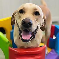 Paddington Pups   Brisbane Dog Gromming Blog