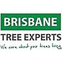 Brisbane Tree Experts Blog