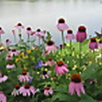 Obsessivecompulsivegardening   Ohio Gardening Blog