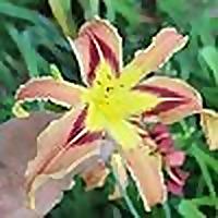 A Northeast Ohio Garden Blog