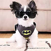 ipartywithbrucewayne | Dog Lifestyle Blog