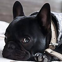 Aurora Pets | Designer apparel and luxury accessories for dogs