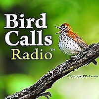 Bird Call Radio | Exploring birdlife around the world