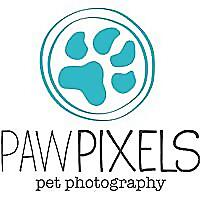Paw Pixels Pet Photography Blog