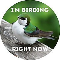 I'm Birding Right Now