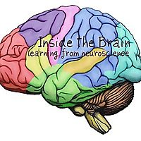 Inside The Brain