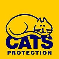Edinburgh Cats