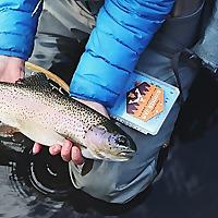 Fishmadpro