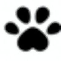 Hush Mood - Cat Blog
