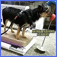 Animal Training Academy